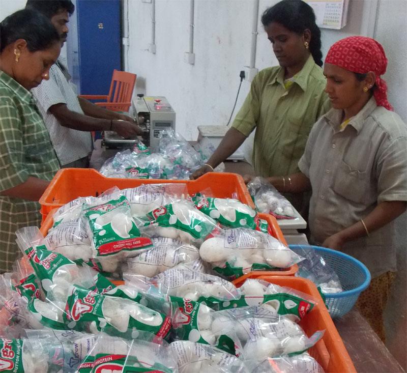 Button Mushrooms Tamilnadu, India from Vgrow Farms, Green